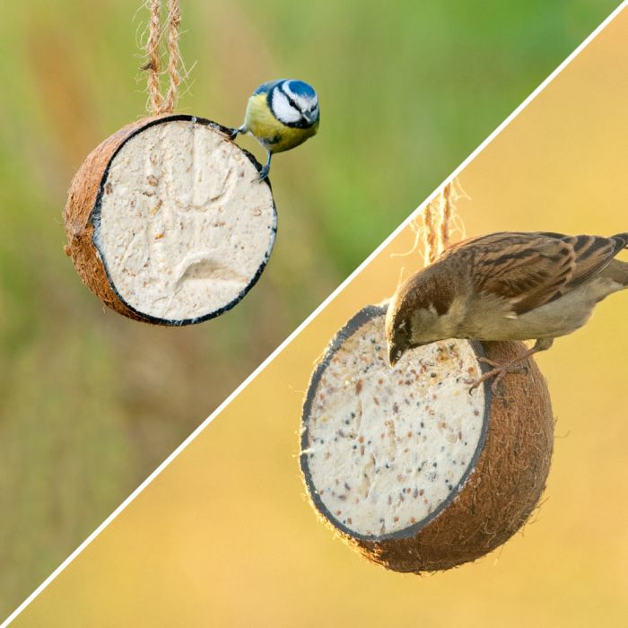 Gefüllte Kokosnuss mit Mehlwürmern