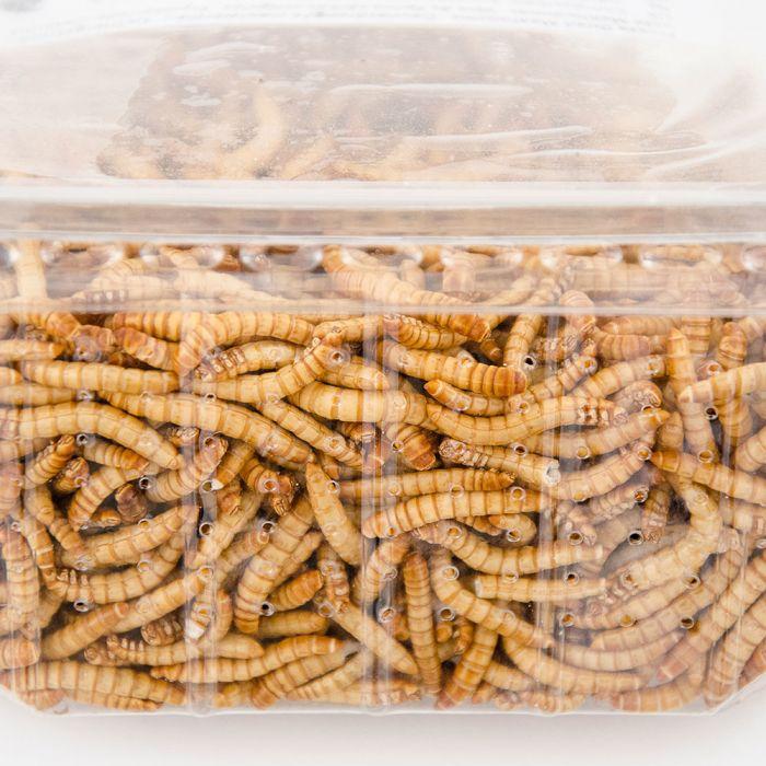 Gefriergetrocknete Mehlwürmer 100g