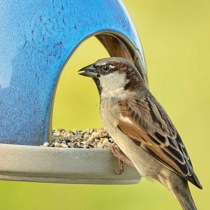 Mischung für kleine Vögel 10kg