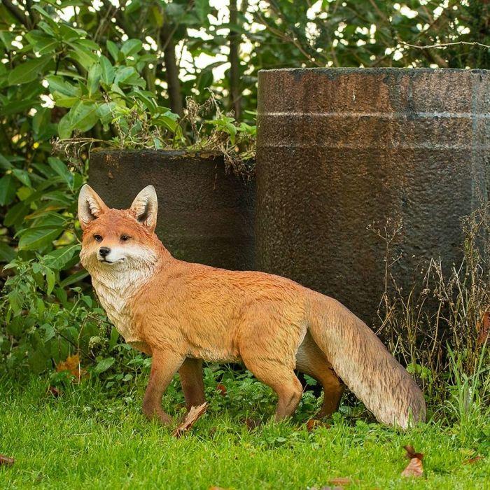 Fuchs (stehend)