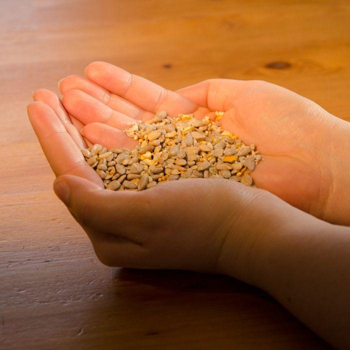 Energiereiche Samen Plus