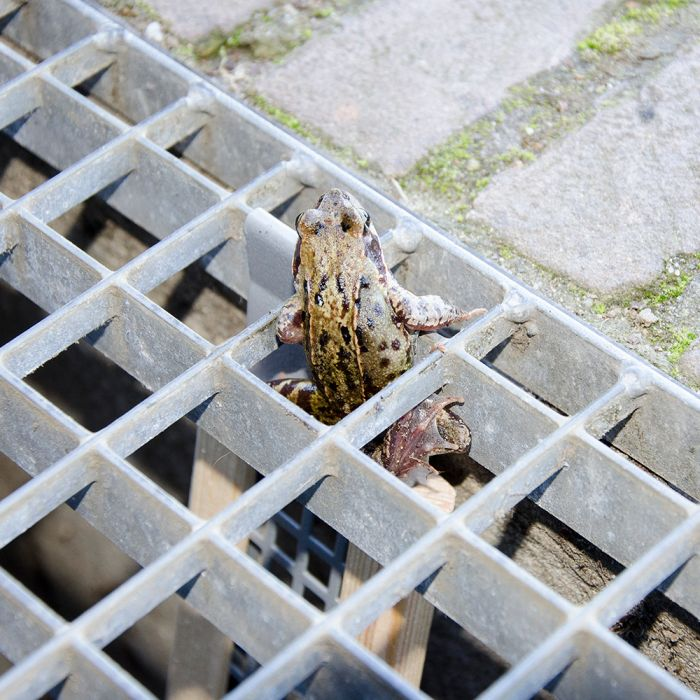 Froschleiter Kurz