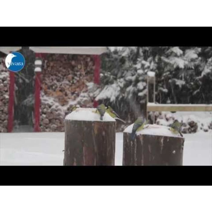 Energieblock-Variation für Vögel (7 Fettblock-Sorten)