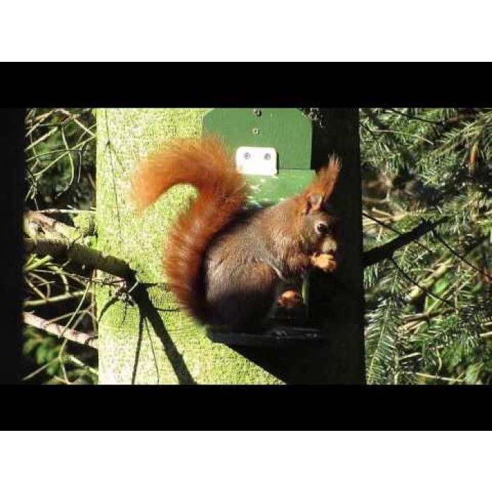 "Eichhörnchenpaket ,,Alberni"""