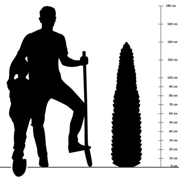 Eisenkraut 14 cm-Topf