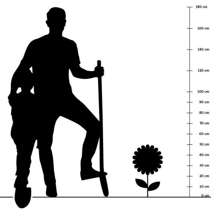 Steppen-Salbei 14 cm-Topf