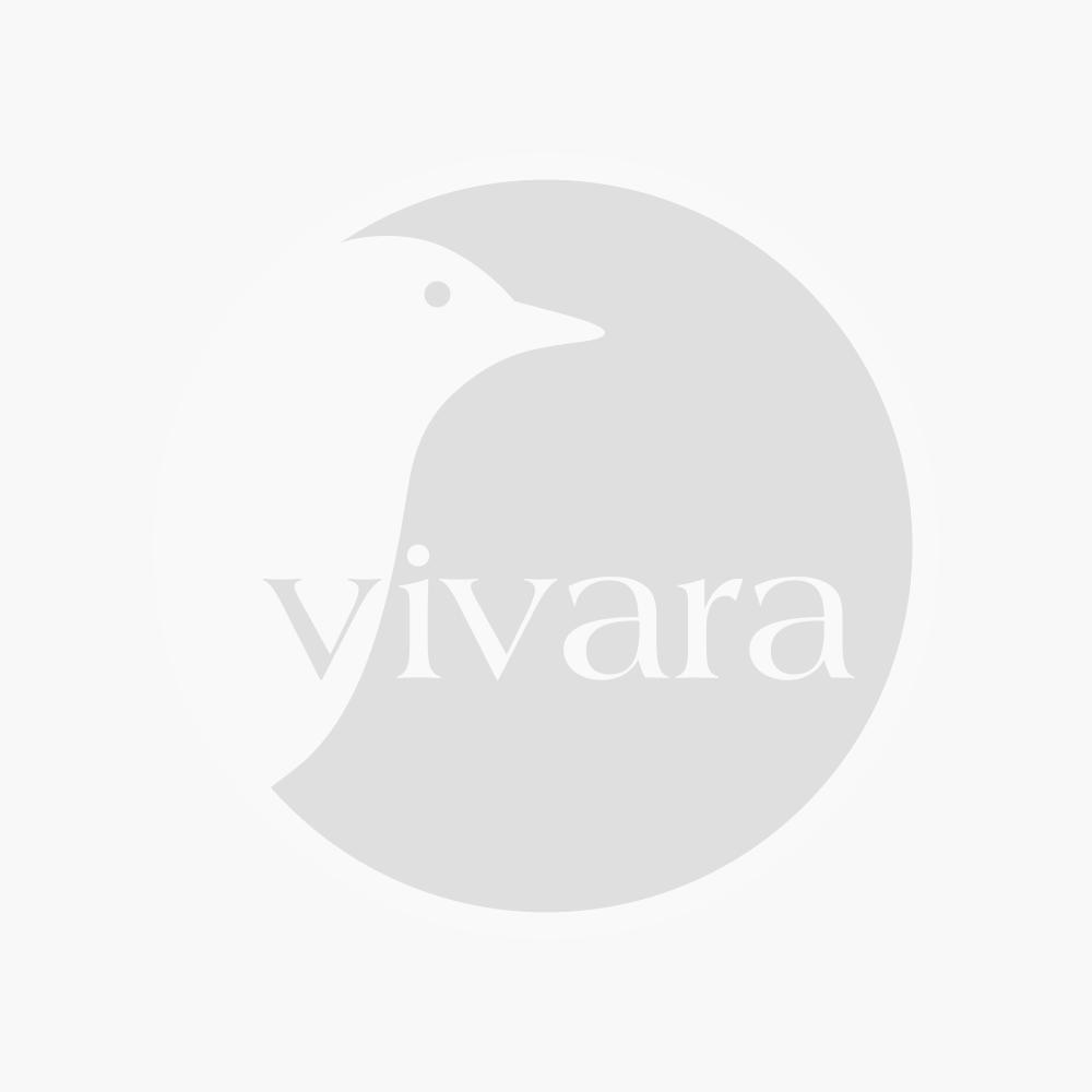 Grußkarte Eisvogel (rechteckig)
