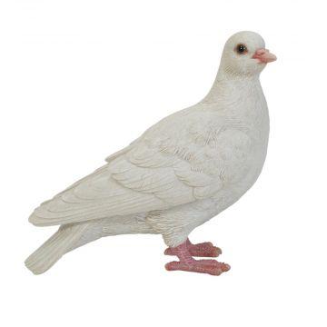 Weiße Taube