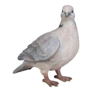 Türkentaube
