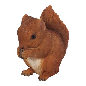 Junges, fressendes Eichhörnchen