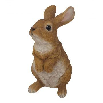 Stehendes Kaninchen