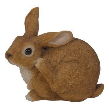 Sitzendes Kaninchen