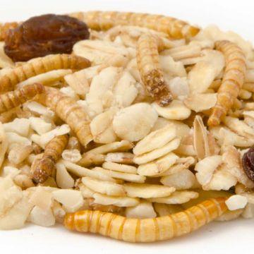 Premium Fettfutter mit Mehlwürmern