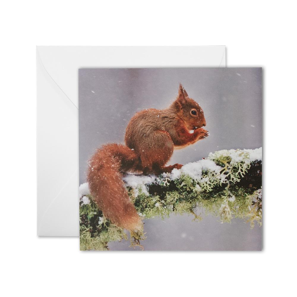 Grußkarte Eichhörnchen Version B (quadrat.)