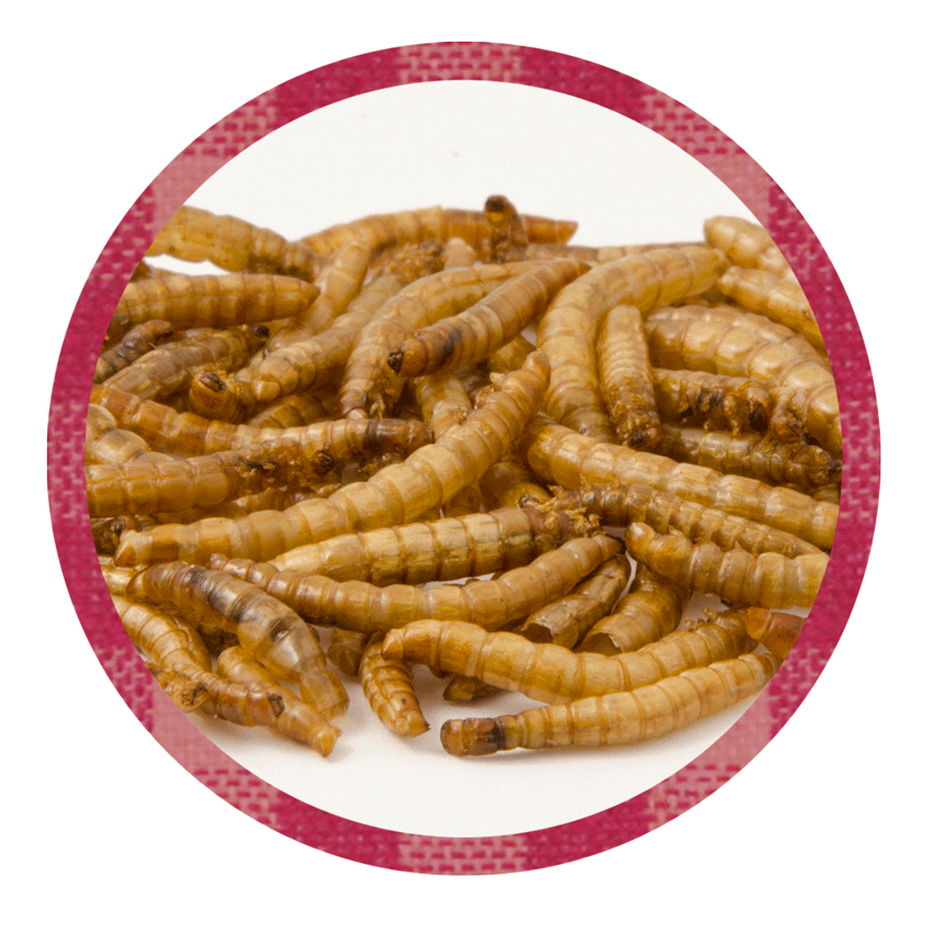 Getrocknete Mehlwürmer