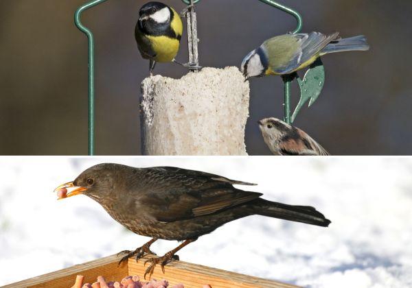 Welches Futter für welchen Vogel?
