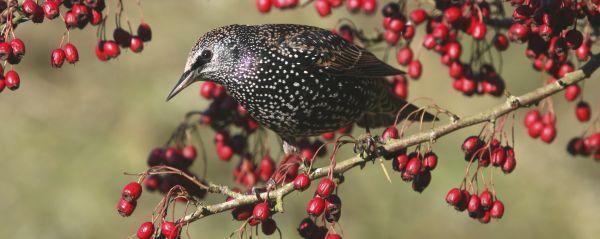 Welche Pflanze sollte in keinem vogelfreundlichen Garten fehlen – auch wenn dieser noch so klein ist?!