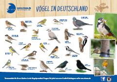 Vögel in Deutschland Poster