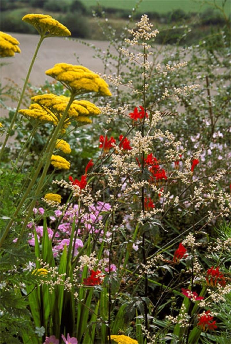 Schmetterlingspflanzen
