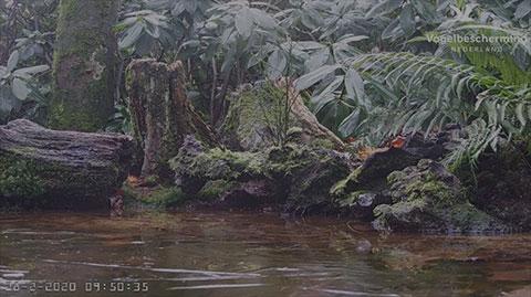 Teich Webcam