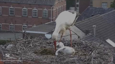 Storch Webcam