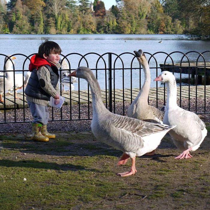 Streufutter für Enten und Schwäne