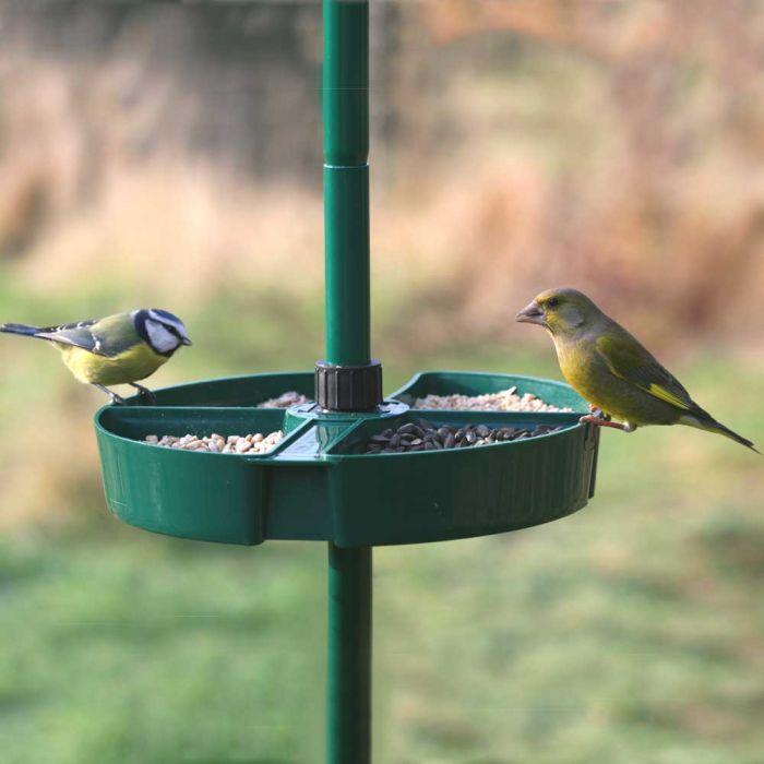 Bird Buffet Selection Tray