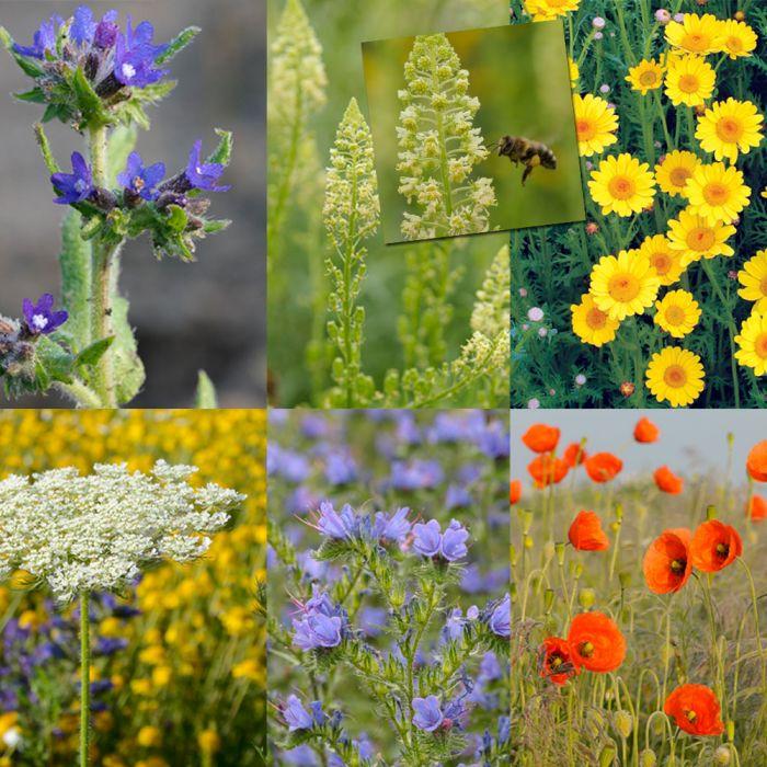 Blumenmischung f�r Solit�rbienen (25g)