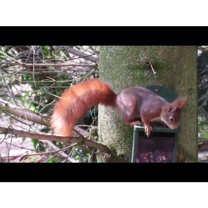 Eichhörnchen-Futterautomat