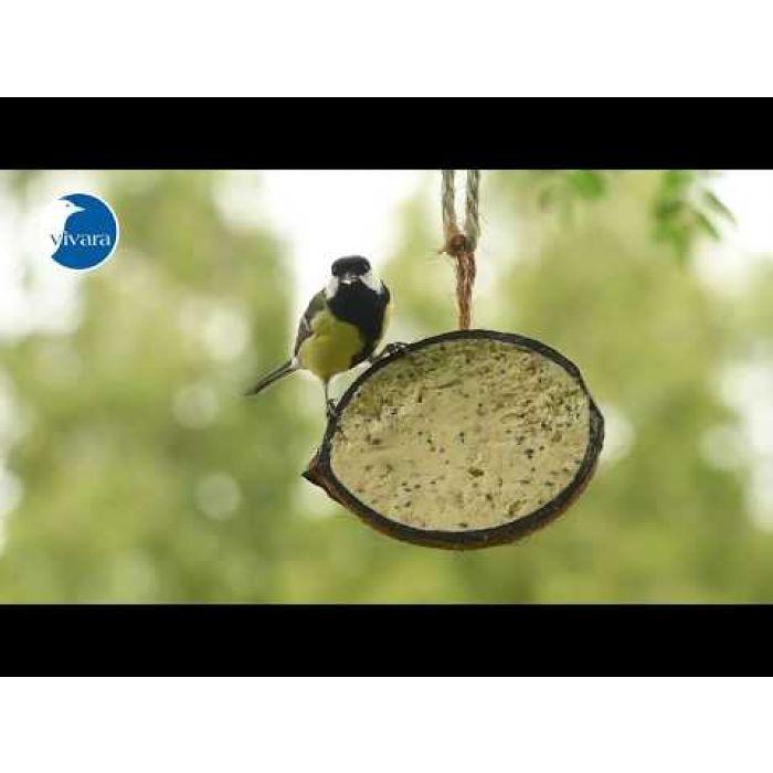 Gefüllte Kokosnuss mit Mehlwürmern (halb & ganz)