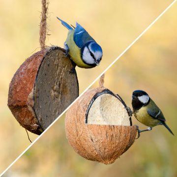 Gefüllte Kokosnuss mit Insekten