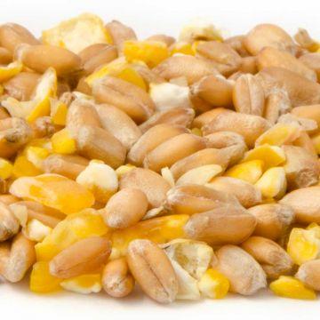 Gemischtes Getreide