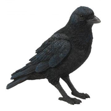 Krähe (stehend)