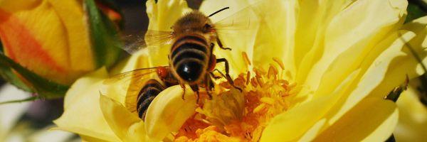 Wildbienen helfen